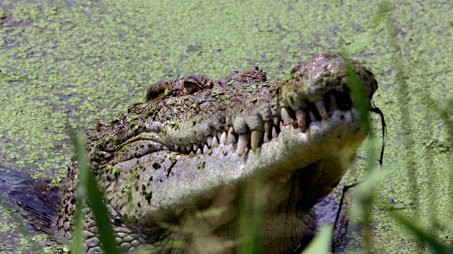 Pastor mauled by giant crocodile during baptismal ceremony
