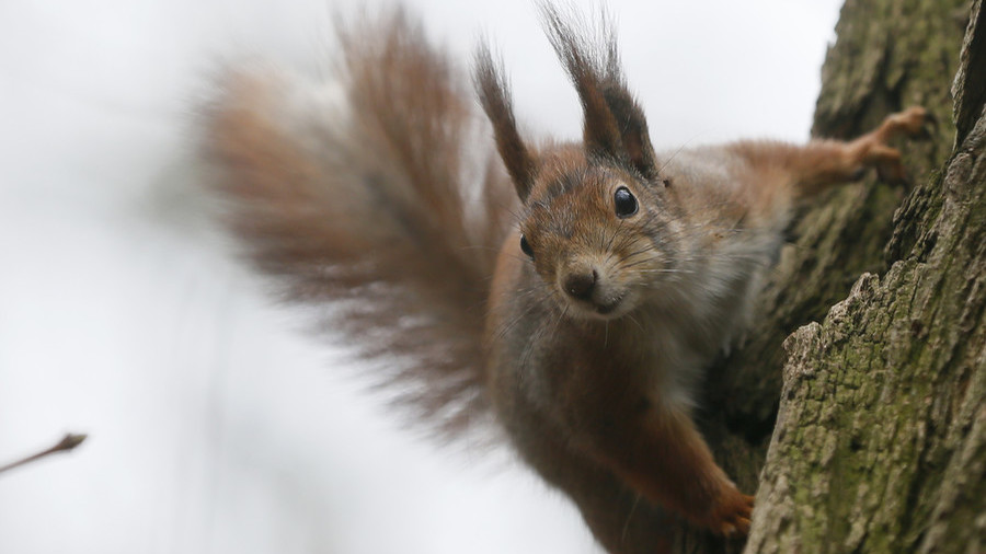 Are humans as stupid as squirrels? RT's Keiser Report investigates