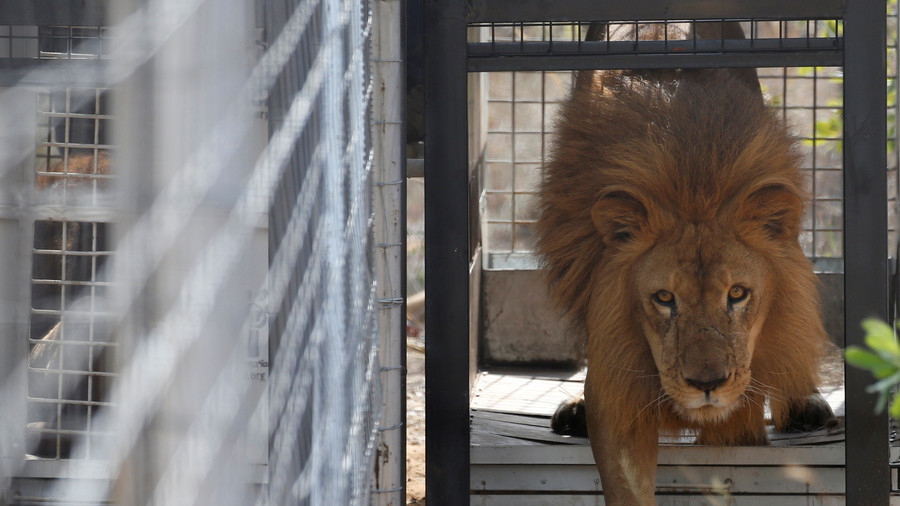 Caged Lions: England's World Cup training base in St. Petersburg to be surrounded by 24ft fence