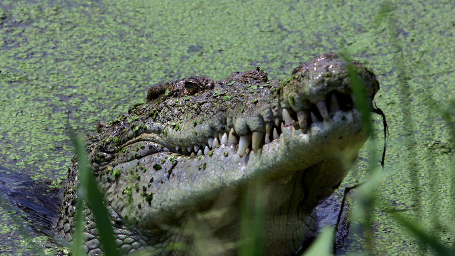 After 10 years of chasing crocodile dog gets eaten alive