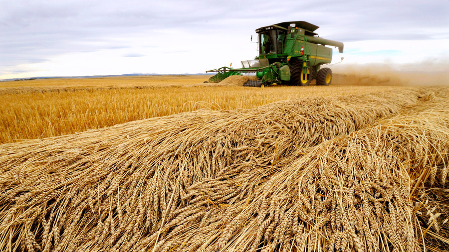 Japan suspends sale of Canadian wheat after GMO grain found in Alberta