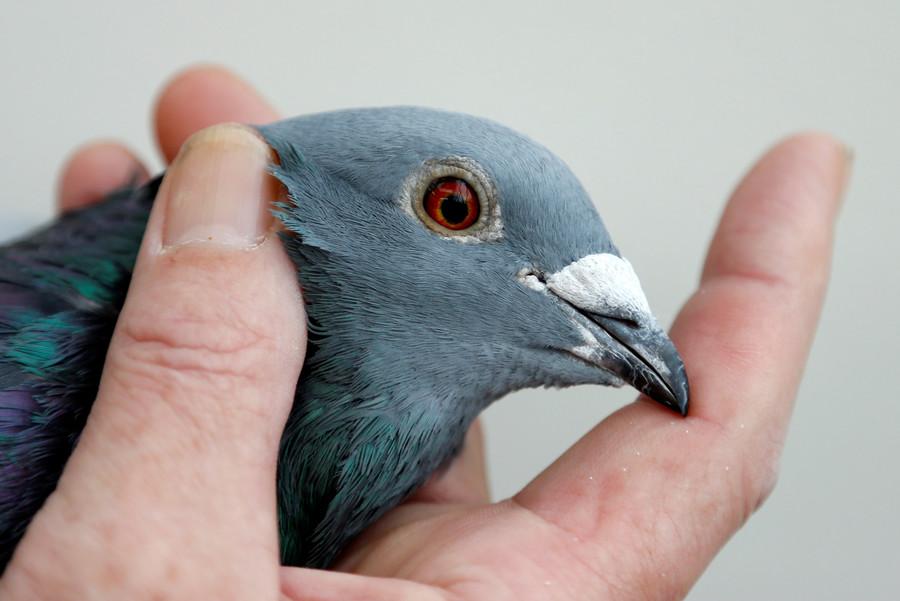 Bird brain: Bizarre 'mutant' fish with 'pigeon's head' caught in China (VIDEO)