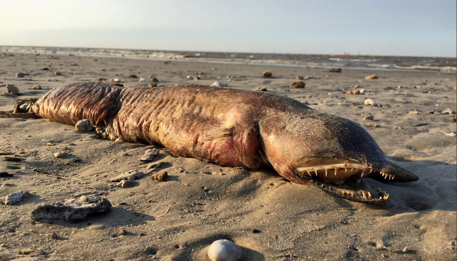 From 'hairy' globster to 'dead mermaid': Spookiest sea creatures to wash up on beaches (IMAGES)