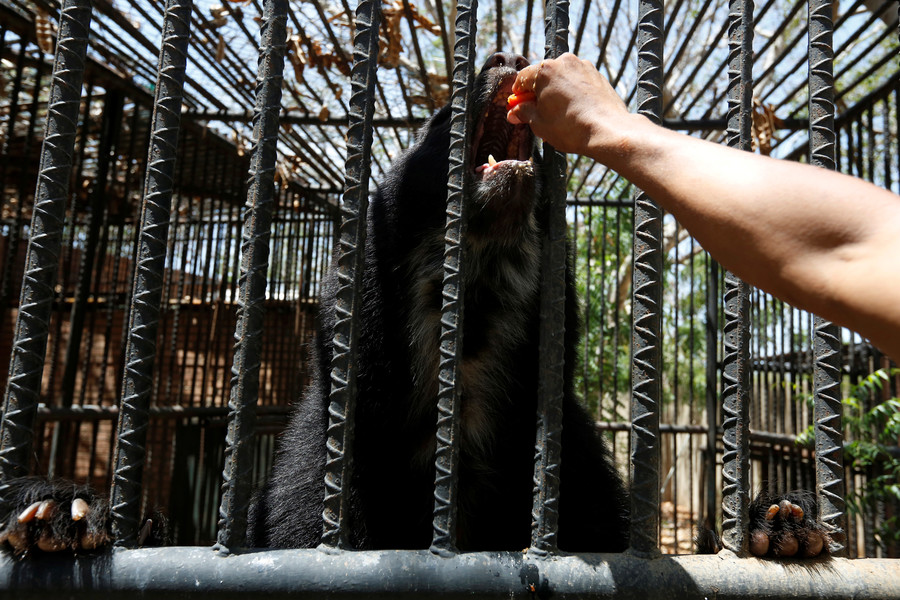 Bear-ly believable: 5yo boy & wild animal engage in 'jump-off' at zoo (VIDEO)