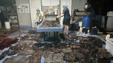 Shocking images show whale died with over 80 trash bags in its stomach (GRAPHIC PHOTOS)