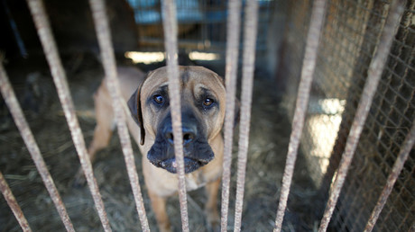 End of tradition? Killing dogs for meat ruled illegal by South Korean court