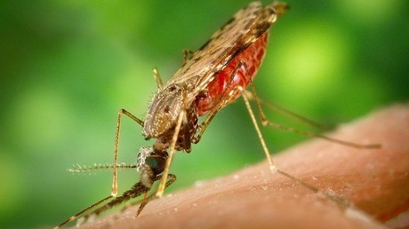 Sex pests: Bill Gates to fund modified mosquitoes in bid to wipe out malaria