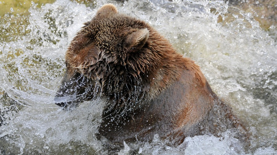 Bear wanders into outdoor Jacuzzi, steals margarita