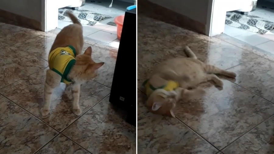 'Neymar the cat' – World Cup craze spreads among fans' pets (VIDEOS)