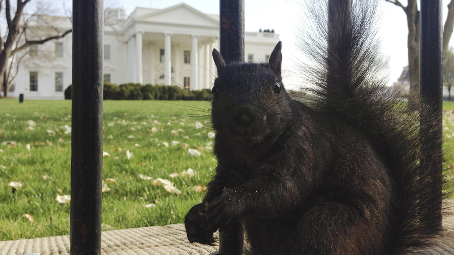Squirrel nibbles on nuts in Donald Trump-shaped feeder (VIDEO)