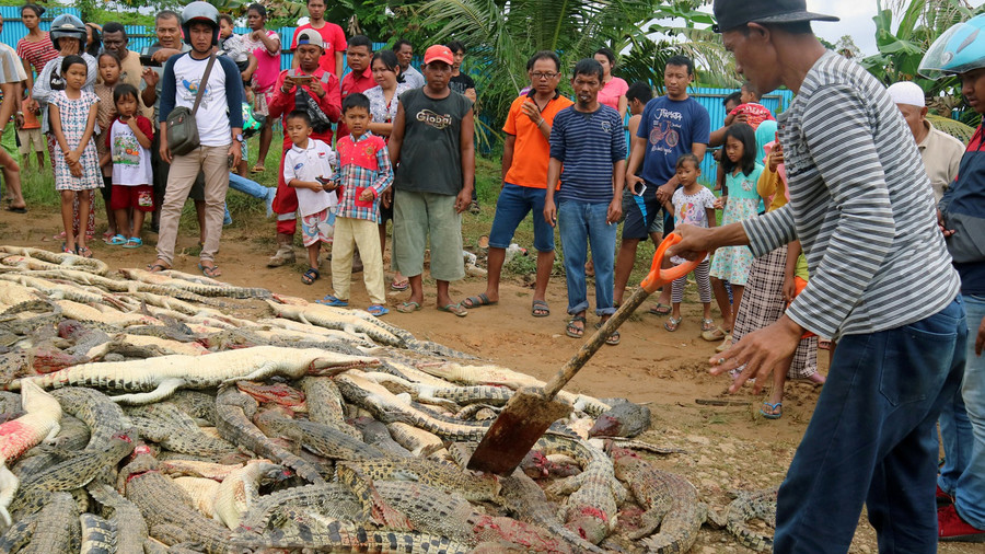 Mob 'revenge kills' 300 crocodiles after man mauled to death
