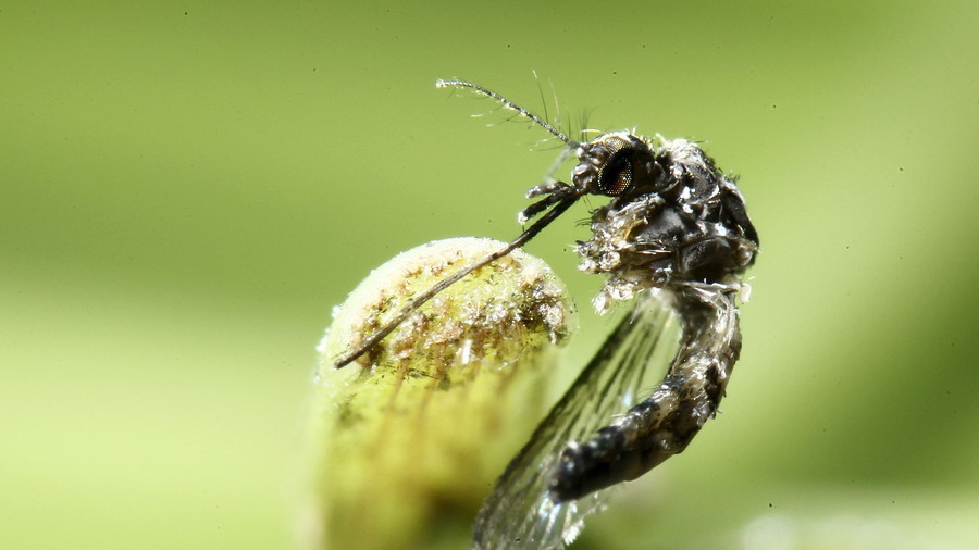 Biting bug ban: French mayor forbids mosquitoes from entering his village