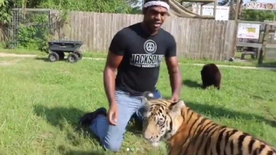 'I'm a huge fan of big cats': UFC star Jon Jones wrestles with baby tiger (VIDEO)