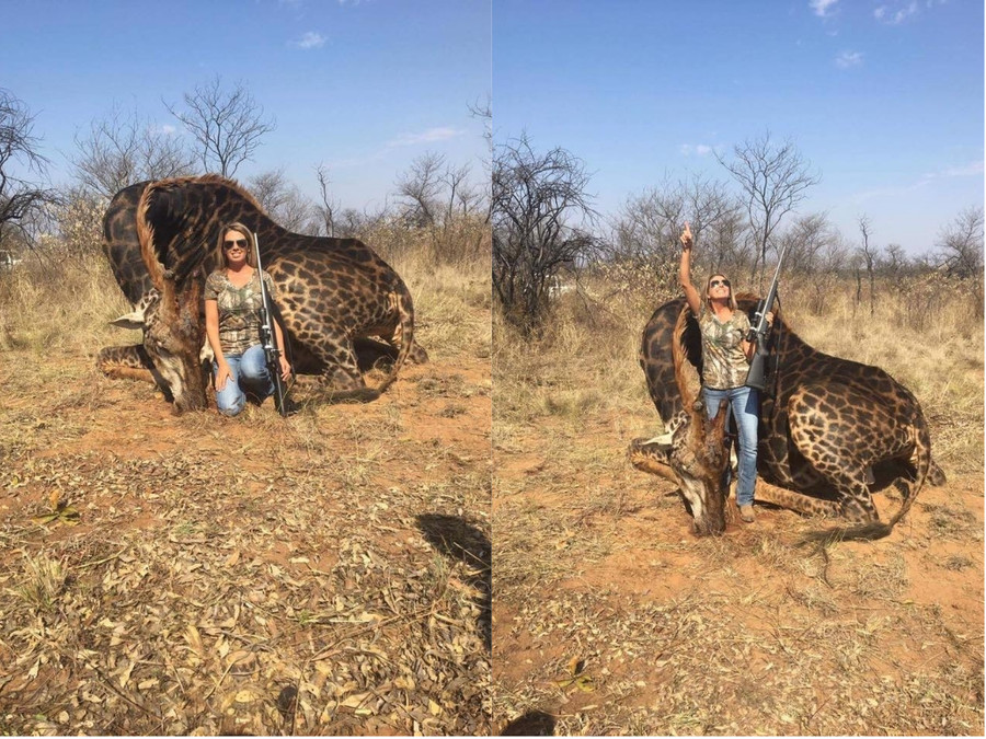 Photos of US female hunter posing with rare black giraffe 'trophy kill' spark outrage