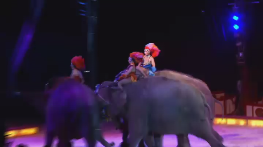Spooked circus elephant nearly crushes German crowd mid-performance (VIDEO)