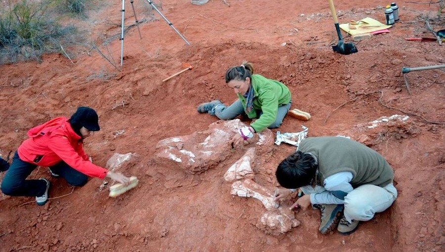 Fossils of 'first giant' dinosaur uncovered in Argentina (PHOTOS)