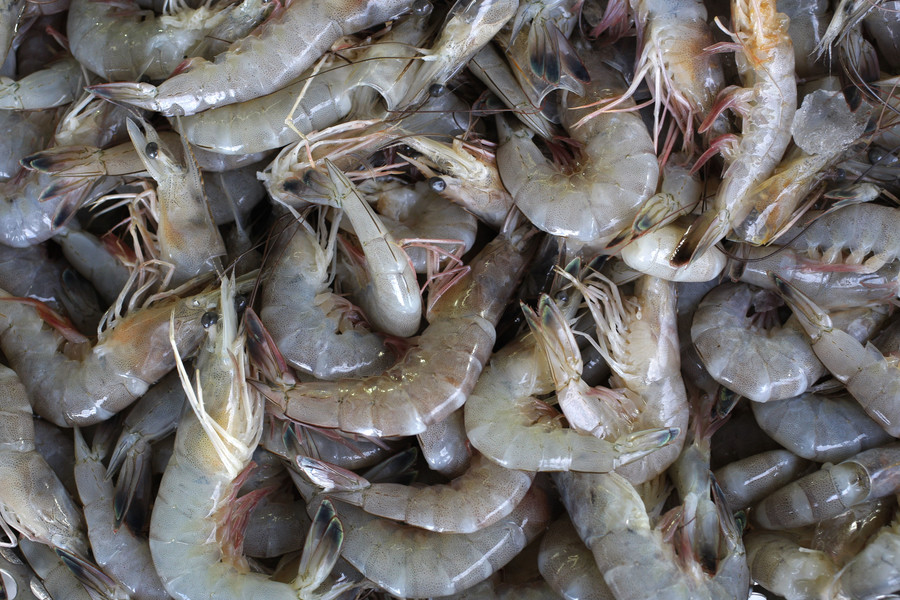 Traces of chemical weapons agent found in shrimp in Sweden
