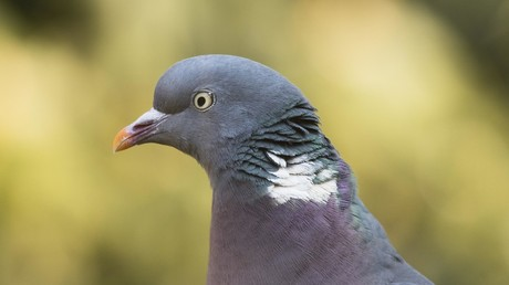Man accused of shooting migrant worker in Italy claims he meant to hit pigeon