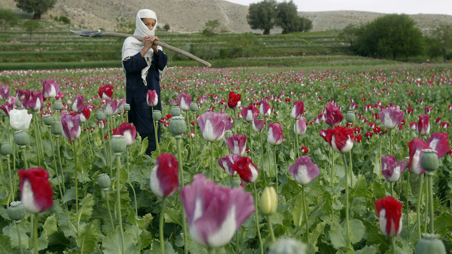 US money to support Afghan irrigation 'helped' poppy cultivation – watchdog