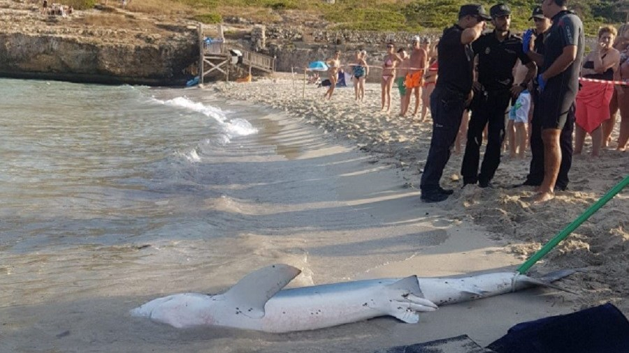 10ft shark terrifies tourists & shuts down beach after being attacked by ray (VIDEOS)