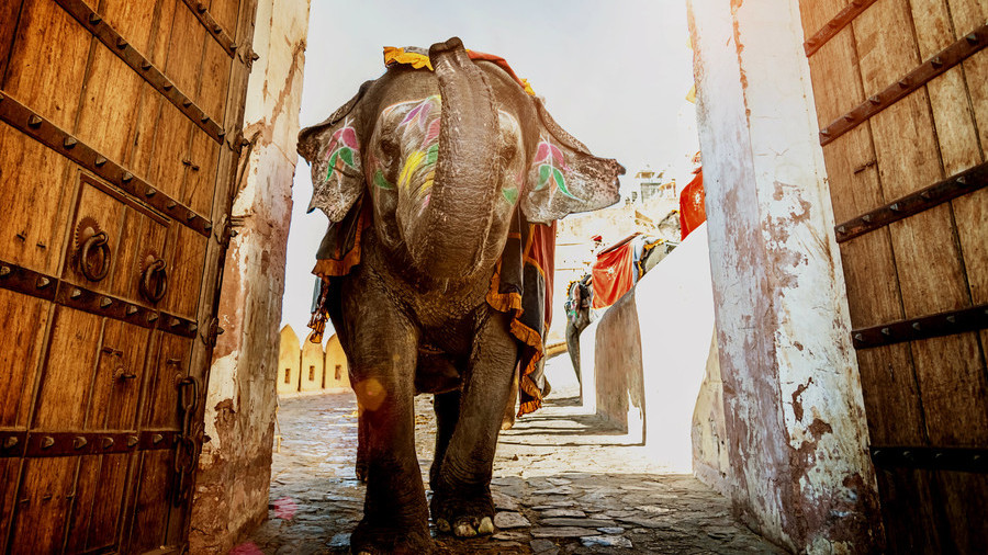 India's economy is an elephant starting to run – IMF