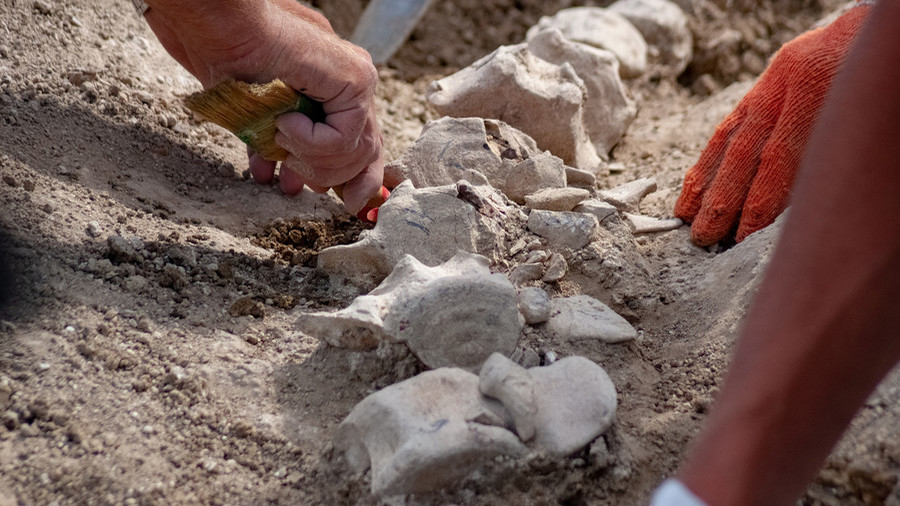 Rare 10-million-year-old whale dug up in Crimea (PHOTOS)