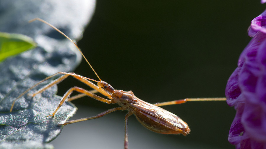 Warning after blood-sucking 'kissing bugs' spread deadly disease