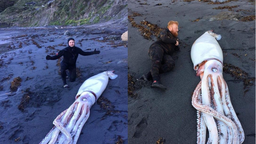 Monstrous giant squid discovered on New Zealand beach (PHOTOS)