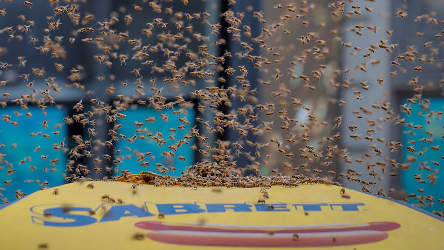Bees besiege Times Square hot dog stand in New York's tourist precinct