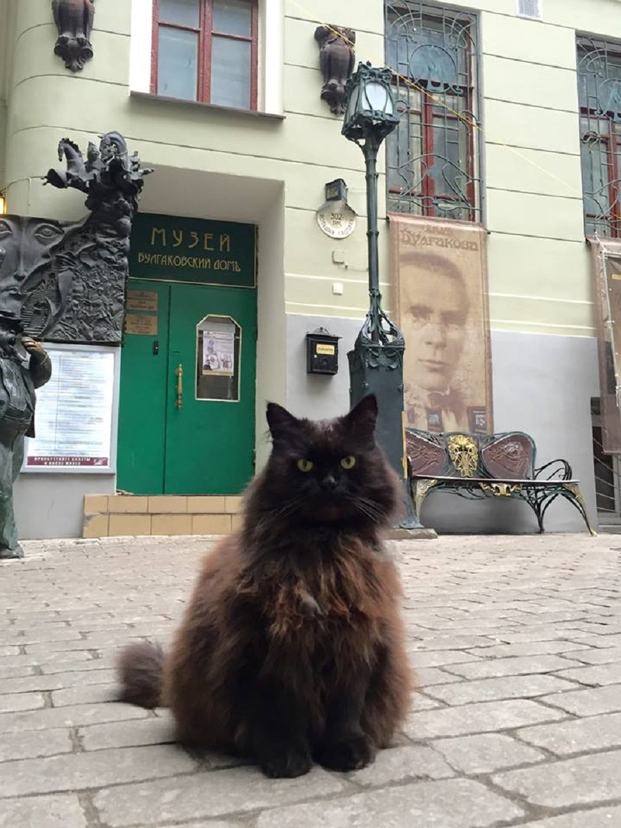 Missing: One semi-demonic black cat from Bulgakov House museum plagued with mystery