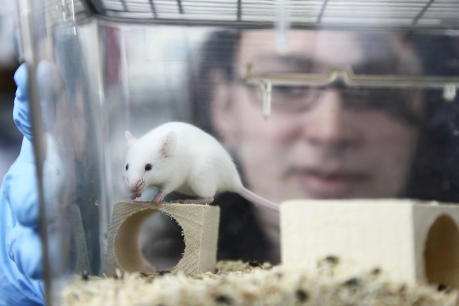 FDA to use aborted fetus parts to breed 'humanized mice,' pro-life lobby outraged