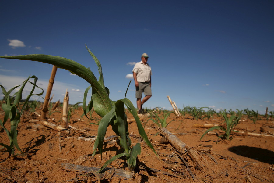 South Africa's land expropriation could trigger default, warns agricultural bank