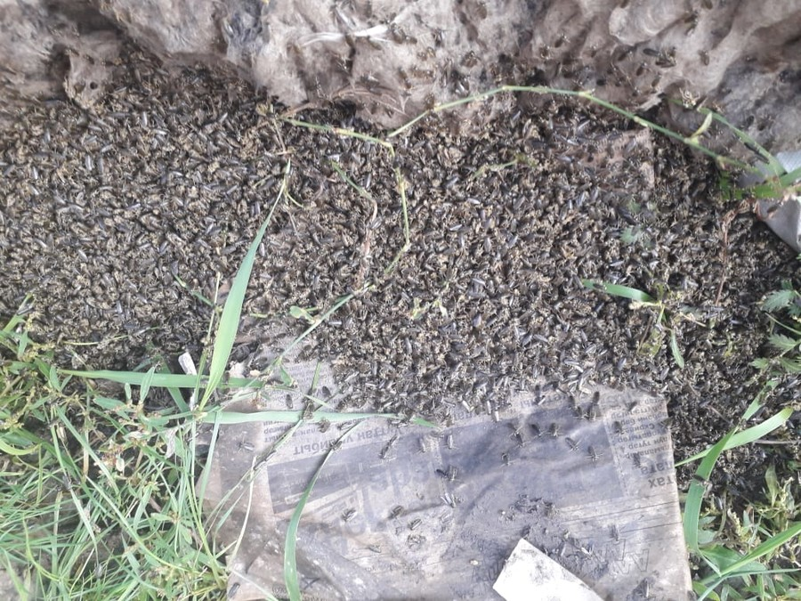 Biblical scenes in eastern Russia as thousands of bugs rain from the sky (VIDEO, PHOTOS)