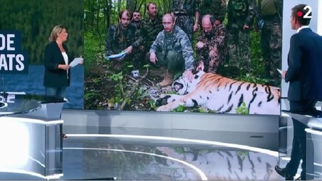 'Propaganda never takes time off': Putin 'hunts tigers' during his holidays, French TV claims