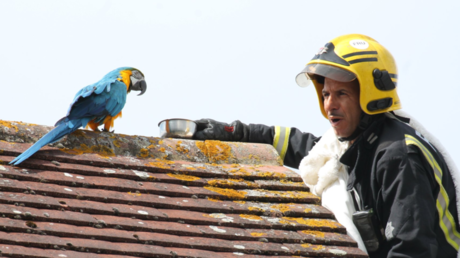 Parrot trapped on roof for three days tells rescuers to 'f**k off!'