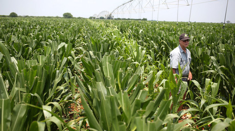 FILE PHOTO: A farm in northern province of Limpopo © Siphiwe Sibeko