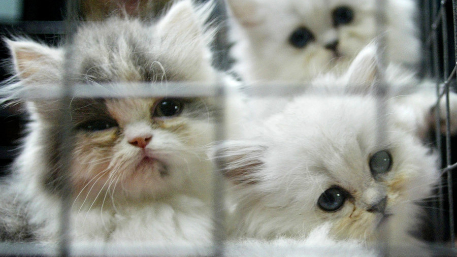 US govt blocks info release on thousands of kittens experimented & killed at Maryland lab – lawsuit