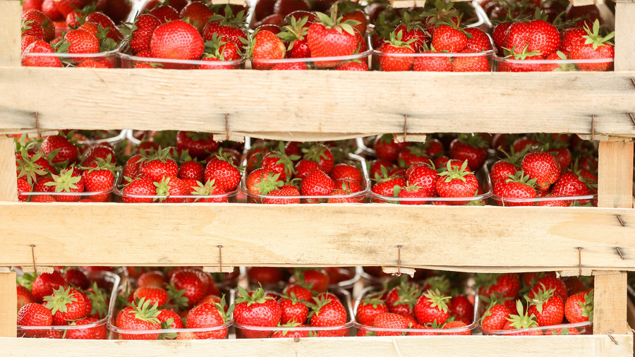 Farmers turn to metal detectors after finding needles in strawberries
