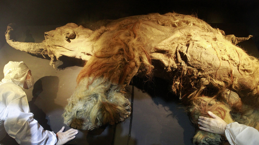 Cloned woolly mammoths will roam Siberia again within a decade, region head predicts