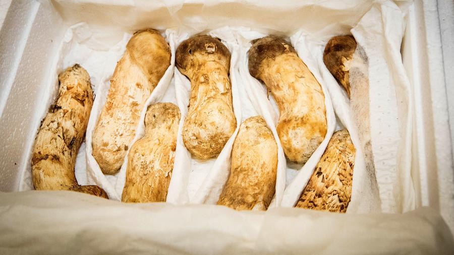 Kim Jong Un lavishes 2 tons of prized mushrooms on S. Korea as peace token