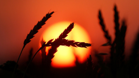 Russia's grain exports surge more than 54% this year