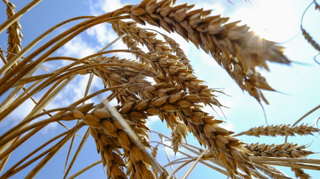 From Russia with wheat: Exports by global grain superpower soar 80%