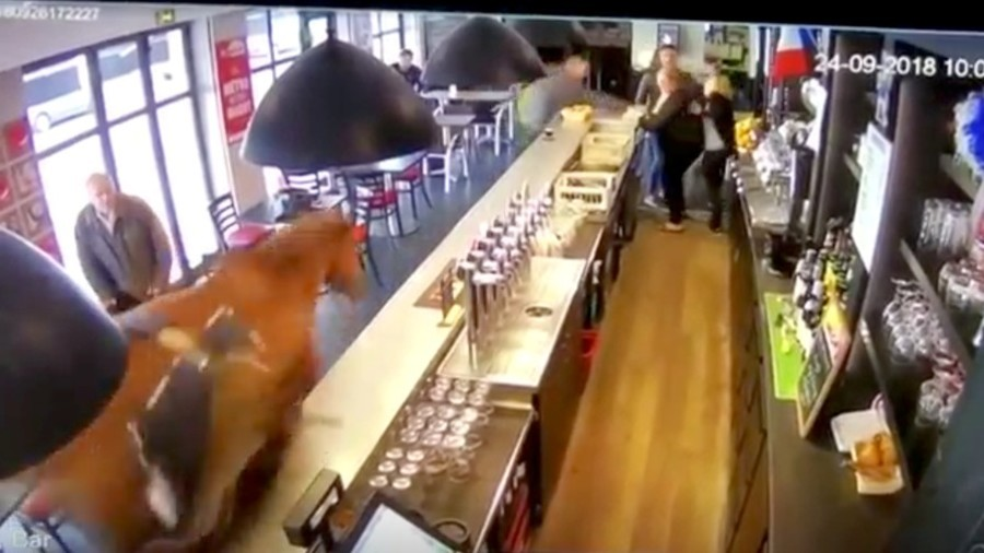 So, a horse galloped into a French bar… no, really