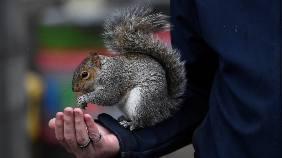 'Emotional support squirrel' on plane drives passengers nuts
