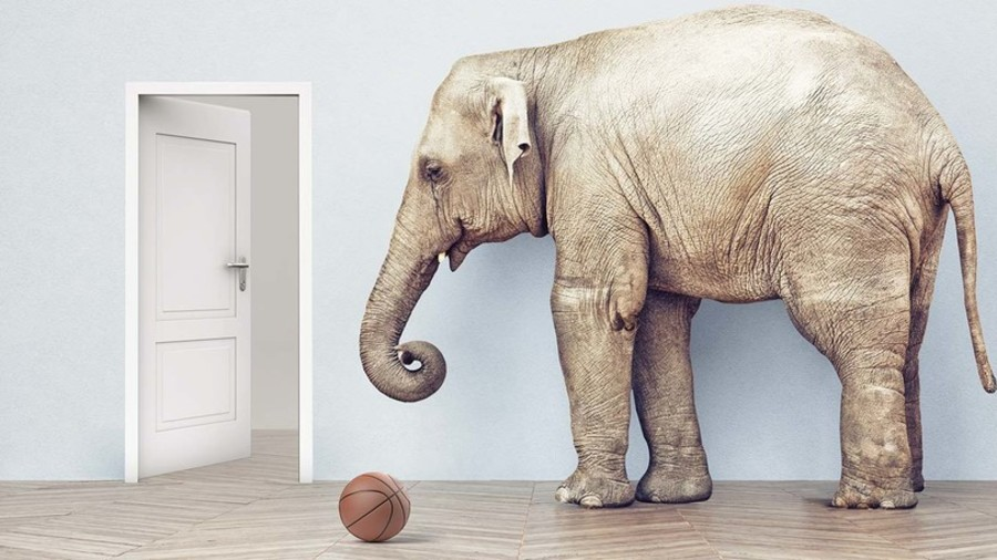 Is a bicycle alive? Can an elephant fit through a house door? DARPA to teach AI 'common sense'