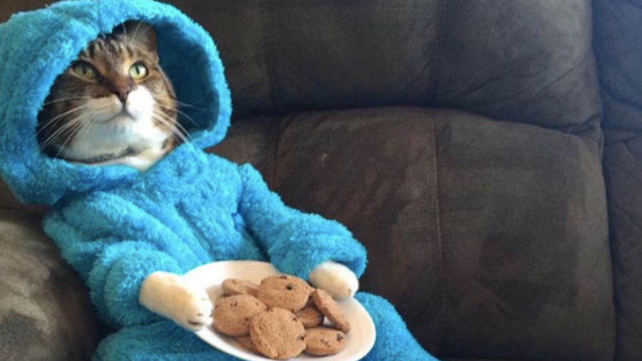 U.S.  embassy in Australia apologises for Cookie Monster cat email