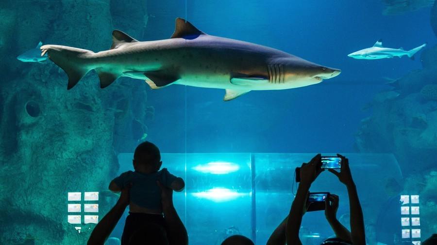 Naked man dives into shark tank for perilous swim at Toronto aquarium (VIDEO)