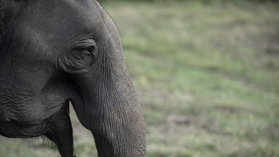 What, you didn't know that grazing elephants are absolutely normal in Siberia?