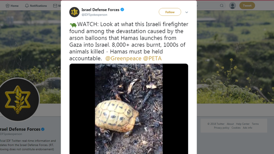 200+ Palestinians killed since March… and IDF alerts PETA about plight of tortoise (VIDEO)
