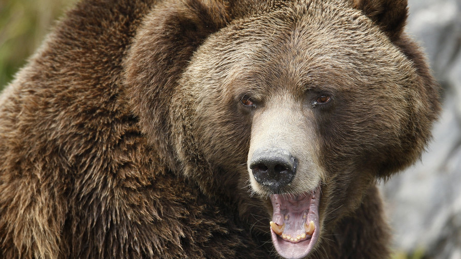 Momma grizzly bear charges man as his family looks on in horror (VIDEO)